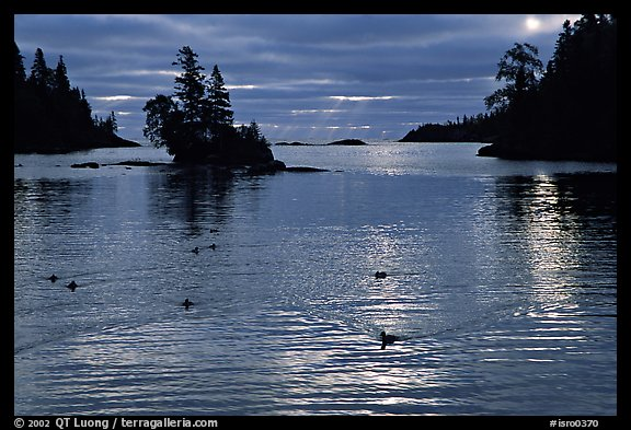 Loons, early morning on Chippewa harbor. Isle Royale National Park, Michigan, USA.
