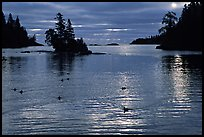 Loons, early morning on Chippewa harbor. Isle Royale National Park ( color)