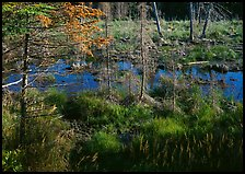 Beaver pond. Isle Royale National Park, Michigan, USA.