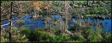 Beaver pond in autumn. Isle Royale National Park (Panoramic color)