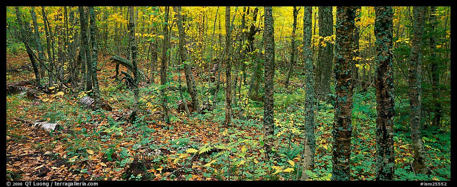 Deciduous forest in autumn. Isle Royale National Park (color)