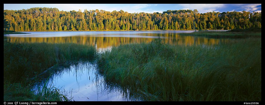 Forest landscape with grasses and lake. Isle Royale National Park (color)