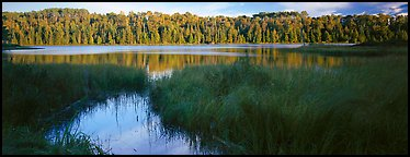 Forest landscape with grasses and lake. Isle Royale National Park (Panoramic color)