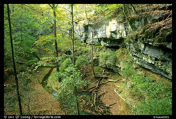 Trees and limestome cliffs in the fall. Mammoth Cave National Park (color)