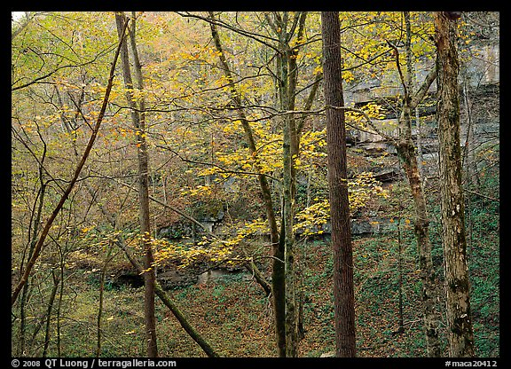Trees and limestome cliffs in autumn. Mammoth Cave National Park (color)