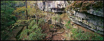 Limestone cliffs and forest. Mammoth Cave National Park (Panoramic color)