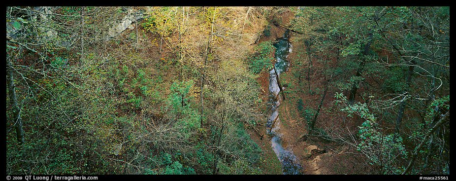 Forest and stream seen from above. Mammoth Cave National Park (color)