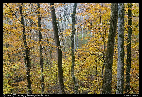Forest in autumn color. Mammoth Cave National Park (color)