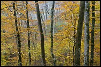 Forest in autumn color. Mammoth Cave National Park, Kentucky, USA.