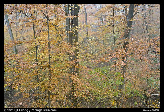 Drizzle and fall colors. Mammoth Cave National Park (color)