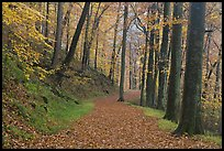 Trail covered with fallen leaves. Mammoth Cave National Park, Kentucky, USA.
