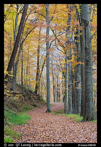 Trail in autumn forest. Mammoth Cave National Park (color)