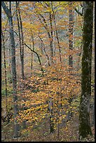 Forest with fall foliage. Mammoth Cave National Park, Kentucky, USA.