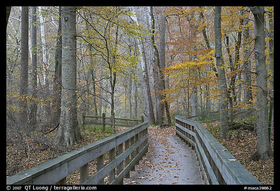 Boardwalk in fall. Mammoth Cave National Park (color)