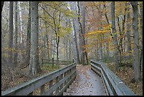 Boardwalk in fall. Mammoth Cave National Park, Kentucky, USA.