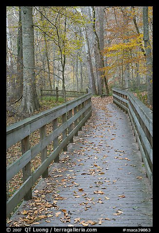 Wooden boardwalk in autumn. Mammoth Cave National Park, Kentucky, USA.