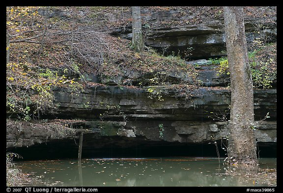 Limestone ledges, trees, and Styx spring. Mammoth Cave National Park, Kentucky, USA.