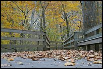 Fallen leaves and boardwalk, ground-level view. Mammoth Cave National Park, Kentucky, USA. (color)