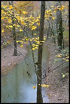 Trees with yellow leaves and Styx river during rain. Mammoth Cave National Park, Kentucky, USA.