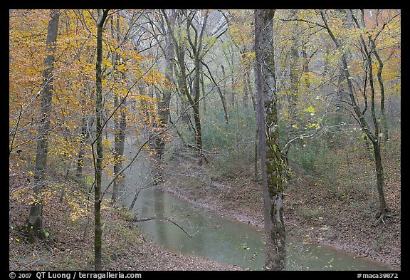 Styx spring and forest in autumn foliage during rain. Mammoth Cave National Park (color)