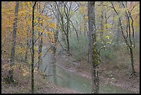 Styx spring and forest in autumn foliage during rain. Mammoth Cave National Park, Kentucky, USA.