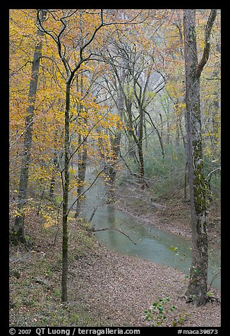 Styx stream and forest in fall foliage during rain. Mammoth Cave National Park, Kentucky, USA.