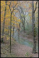 Styx stream and forest in fall foliage during rain. Mammoth Cave National Park, Kentucky, USA. (color)