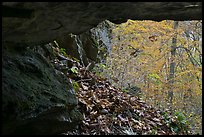 Forest with autumn color seen from inside cave. Mammoth Cave National Park, Kentucky, USA.