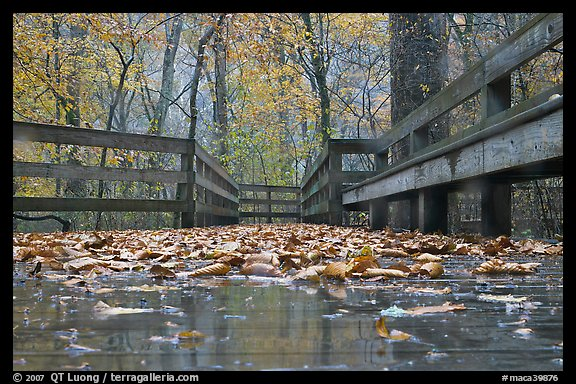 Wet boardwalk during rain. Mammoth Cave National Park, Kentucky, USA.
