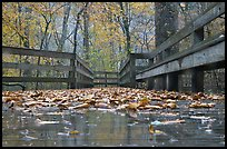 Wet boardwalk during rain. Mammoth Cave National Park, Kentucky, USA. (color)