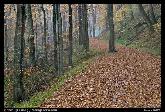 Trail with fallen leaves. Mammoth Cave National Park (color)