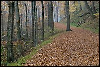 Trail with fallen leaves. Mammoth Cave National Park, Kentucky, USA.