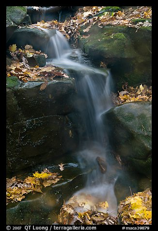 Stream, boulders, and fallen leaves. Mammoth Cave National Park, Kentucky, USA.