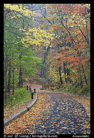 Paved trail and forest in fall foliage. Mammoth Cave National Park (color)