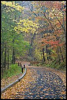 Paved trail and forest in fall foliage. Mammoth Cave National Park, Kentucky, USA. (color)