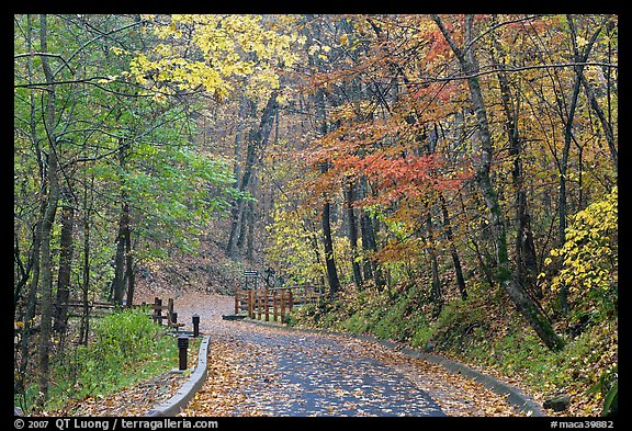 Trail leading to historic cave entrance in the fall. Mammoth Cave National Park (color)