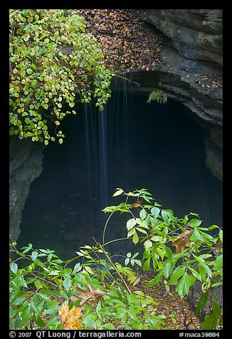 Entrance shaft and rain-fed water drip. Mammoth Cave National Park, Kentucky, USA.