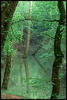 Trees reflected in green water of Echo River Spring. Mammoth Cave National Park, Kentucky, USA. (color)