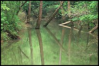 Trees and reflections in Echo River Spring. Mammoth Cave National Park, Kentucky, USA.