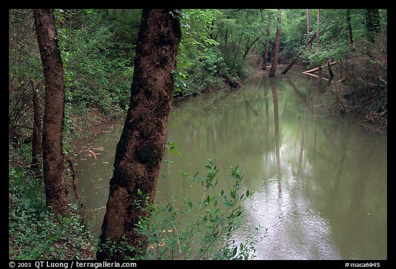 Echo River Spring. Mammoth Cave National Park (color)