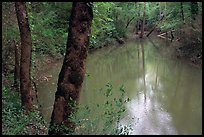 Echo River Spring. Mammoth Cave National Park ( color)