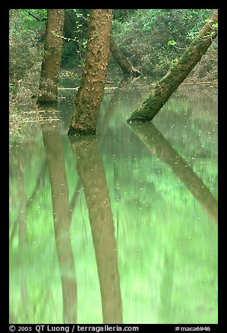 Trees and reflections in green waters of Echo River Spring. Mammoth Cave National Park (color)