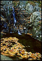Spining leaves and cascade. Shenandoah National Park ( color)