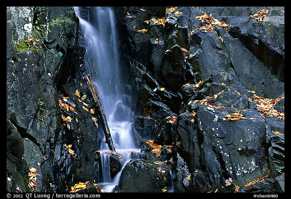Cascade over dark rock with with fallen leaves. Shenandoah National Park (color)