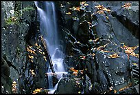 Cascade over dark rock with with fallen leaves. Shenandoah National Park, Virginia, USA.