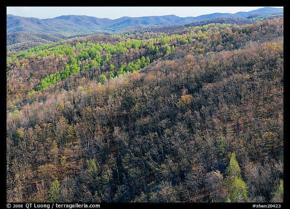 Hillside with bare trees and trees in early spring foliage. Shenandoah National Park (color)
