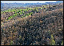 Hillside with bare trees and trees in early spring foliage. Shenandoah National Park, Virginia, USA.