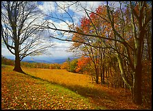Meadow Overlook in fall. Shenandoah National Park, Virginia, USA. (color)