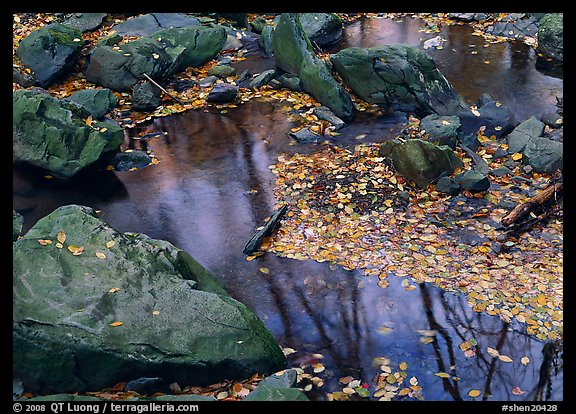 Reflexions of trees in a creek with fallen leaves. Shenandoah National Park (color)