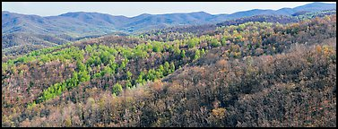 Hillside in early spring with some trees leafing out. Shenandoah National Park (Panoramic color)